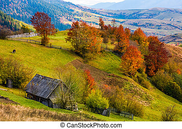 woodshed on grassy hillside with reddish trees. gorgeous...