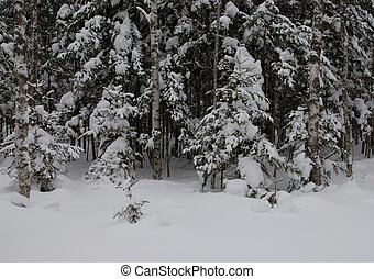 wood(timber) taiga in(to;at) snow Russia Seaside edge...