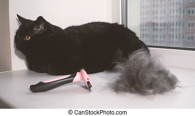 Wool. A combed cat from a wool