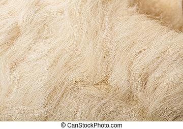 wool sheep closeup - nature woolly sheep fleece background