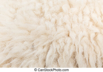 Wool sheep closeup for background