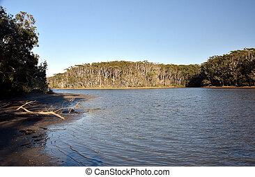 woolgoolga, sorrunded, jezioro, drzewa, zatoczka