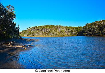 woolgoolga, sorrunded, jezioro, zatoczka, drzewo