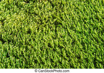 Woolly Moss Background