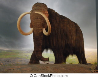 Wooly Mammoth exhibit - Prehistoric Wooly Mammoth display