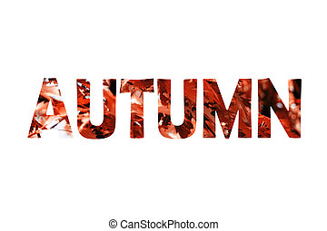 Word autumn made from red leaves isolated on white