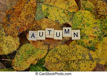 word autumn made from wooden letters on yellow dry leaves