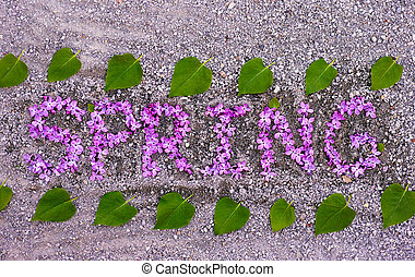 Word Spring spelled out from violet lilac flowers with green leaves on the ground.