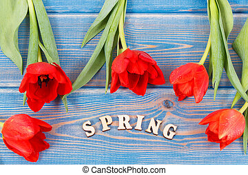 Word spring with fresh tulips on blue boards