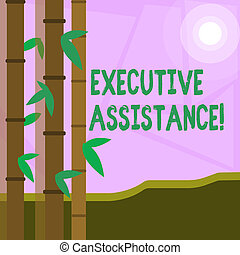 Word writing text Executive Assistance. Business concept for focus on providing highlevel administrative support Colorful Sets of Leafy Bamboo on Left Side and Moon or Sun with Round Beam.