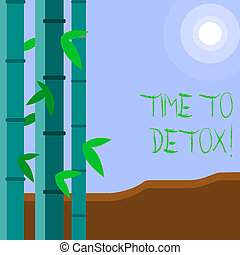Word writing text Time To Detox. Business concept for when you purify your body of toxins or stop consuming drug Colorful Sets of Leafy Bamboo on Left Side and Moon or Sun with Round Beam.