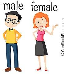 wordcard, macho, femininas, oposta