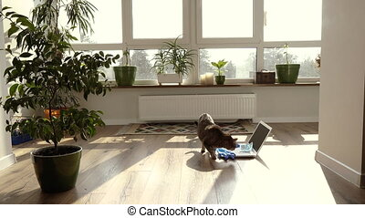 Work at home. Work at home during the worldwide virus pandemic.