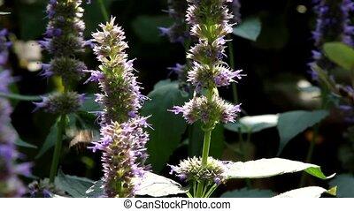 Work bee on flowers
