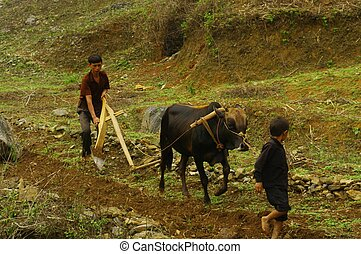 Work Family( Ha Giang) - Working with the Hmong family of...