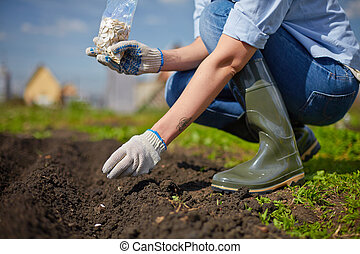 Work in the garden - Image of female farmer sowing seed in...