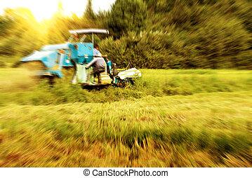 Work rice harvester