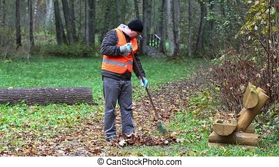 Worker collect leaves with a rake