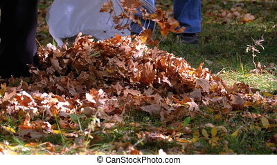 Worker Collects Yellow Fallen Leaves in the Autumn Park using a Rake