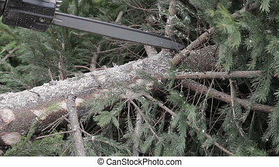 Worker cut a tree branch by chainsaw