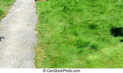 worker cut grass