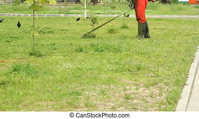 Worker cutting a grass using a trimmer outdoors - The worker...