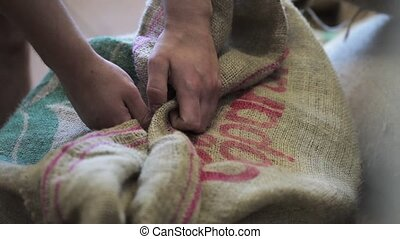 Worker hands unpacking bag with not fried coffee grains.