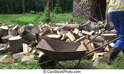 Worker man boy load chopped fire wood to rusty wheelbarrow....