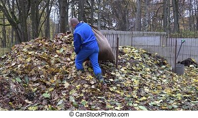 Worker man carry bag sack full of dry leaves and dump it on compost pile. 4K