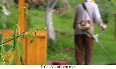 worker man trim grass - Plant leaves move in wind and...