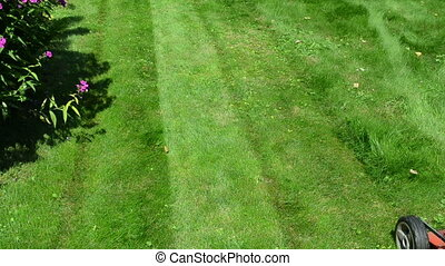 worker mow lawn cutter - gardener male man with shorts and...