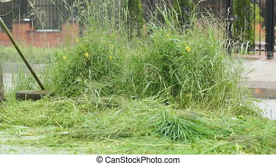 Worker mowing a grass using a trimmer outdoors - The worker...