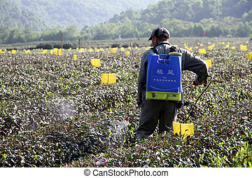 Worker on the tea plantation