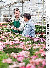 Worker showing customer a flower in greenhouse in garden...