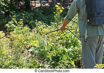 worker sprays pesticide on potato plantation