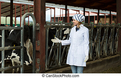 worker taking care of dairy herd in livestock farm