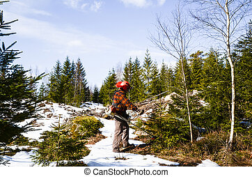 Worker with brush cutter - A worker in forest with a brush...