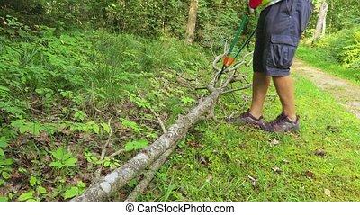 Worker with garden scissors trumps dry trees