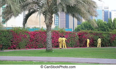 Workers are clipping a privet hedge. - Gardeners trimming...