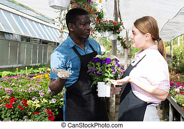 Workers inspecting bloomy plants - Two experienced workers ...