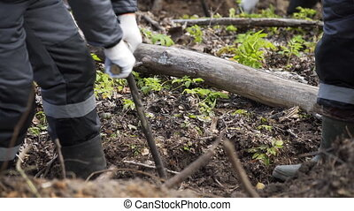 Hands planting a new forest. Volunteers Planting an evergreen tree. nature concept. Nature, environment, ecology concept. Reforestation. New life concept.