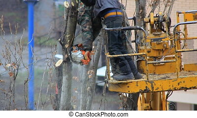 Workers pruning trees branches