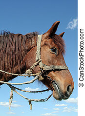 Workhorse - A portrait of a workhorse