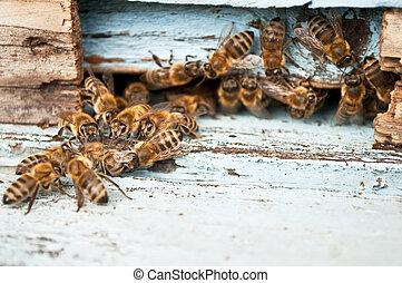 Working bee macro shot
