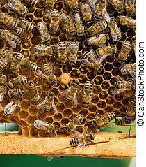 Working Bees On Honeycombs