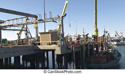 Fish dock work day. One crane moves buoys from crab boat to dock, and another prepares to hoist halibut for sorting.