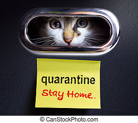 working from home; covid-19 quarantine concept; Scared kitten locked quarantined in his house.