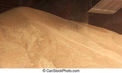 Working grain bucket motion. Heap of corn in warehouse.