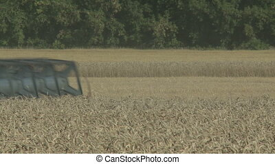working harvesting combine in the dust field of wheat
