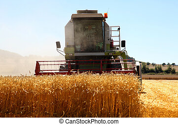 Working harvesting combine in the